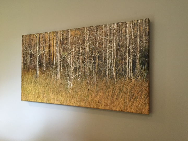 "Gallery Wrapped Canvas of Michael Stebel Photography image ""Grass & Cypress"""