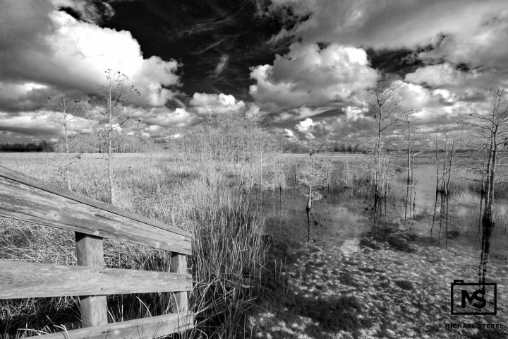 Grassy Waters Preserve II