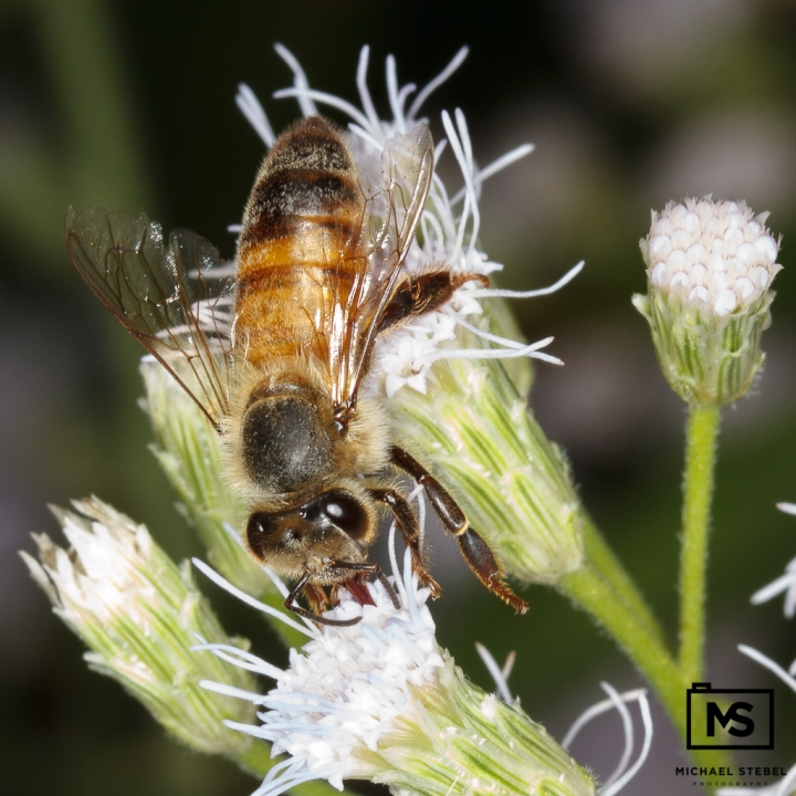 Bee On The Job #2
